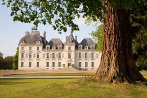 Chateau de Cheverny behind the tree